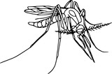Vector - contour mosquito  isolated on white background poster