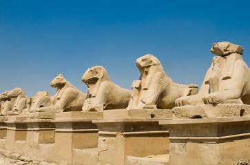 Sheep in Karnak temple (Luxor, Egypt)