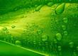 Leinwandbild Motiv Close-up of green plant leaf