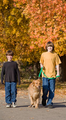 Boys Walking the Dog in the Fall