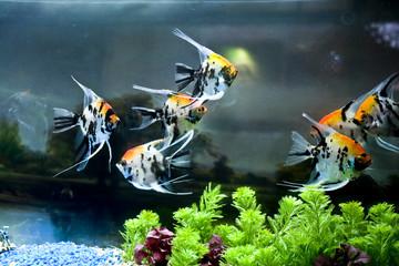Close up colorful tropical fish in a aquarium