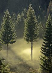 Herbstimpression 3
