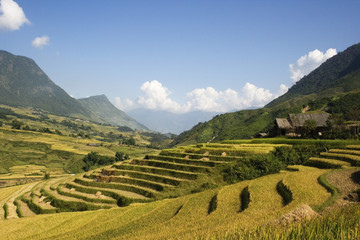 Rice terraces and blue skies