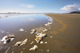 Wide sandy beach and the rests of sea foam on an edge of water poster