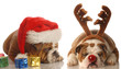 bulldogs dressed up as santa and rudolph - upset santa