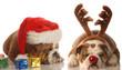 bulldogs dressed up as santa and rudolph - upset santa