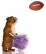 english bulldog with pompoms cheering on football game