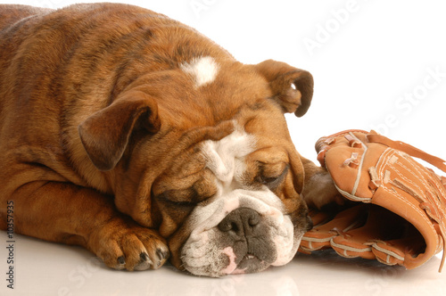 english bulldog sleeping with baseball and baseball glove