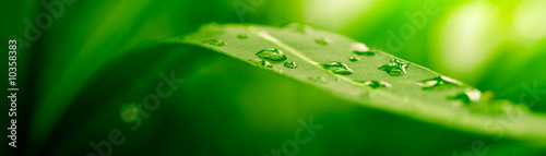 green leaf, nature background - 10358383