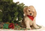 american cocker spaniel puppy under christmas tree poster