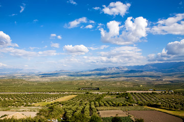 Magnificent panorama of olive groves by Baeza town, Spain