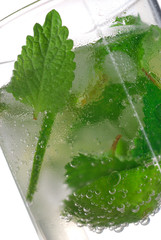 Inside mojito. Close up, isolated on white.