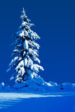 Snow covered evergreen on a moonlit silent night. poster