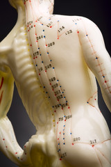 Mannequin used to demonstrate acupuncture showing spine