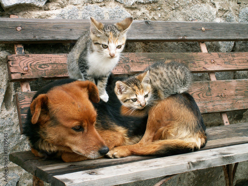 two young cats and dog are friends