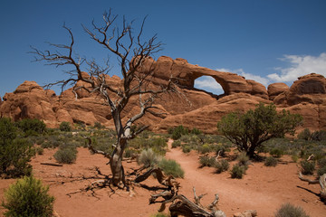 Der Skyline Arch im Arches National Park in Utah