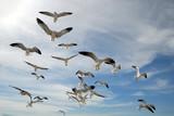 Flock of curious seagulls poster
