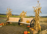 Two benches with corn stalks by them. poster