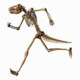 Skelett 081113 1 poster