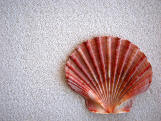 Shell and Sand