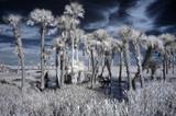 Infrared Wetland Landscape poster