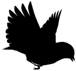Bird103