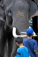 two asian boys with indian elephant