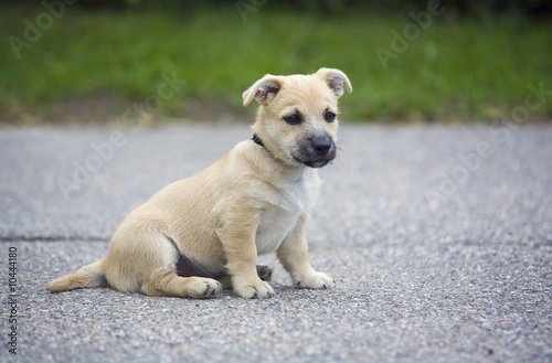 Young Dog on Road