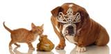 kitten and bulldog set up like fairytale sleeping beauty poster