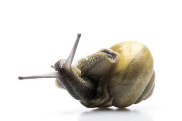 stranded garden snail.