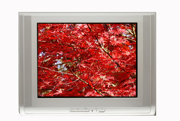 TV and Autumn Display
