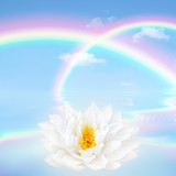 Rainbow and Lotus Lily Flower