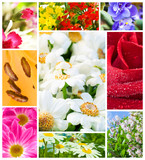multi image Flowers