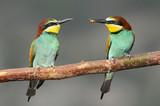 Marriage between (Bee-eater) poster
