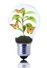 eco concept: lightbulb with young plant and butterflies inside