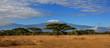 canvas print picture - Kilimanjaro Wide