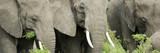 Fototapeta dziki - przygoda - Dziki Ssak