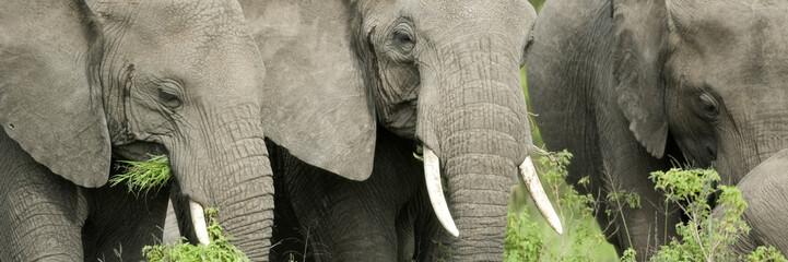 elephant's head in the wild