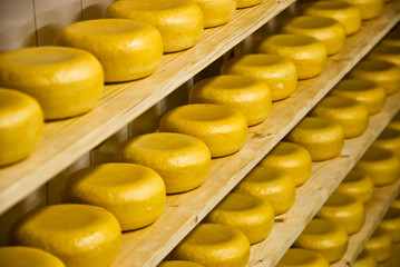 Traditional Dutch cheese called Gouda