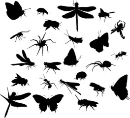 twenty four insect silhouettes