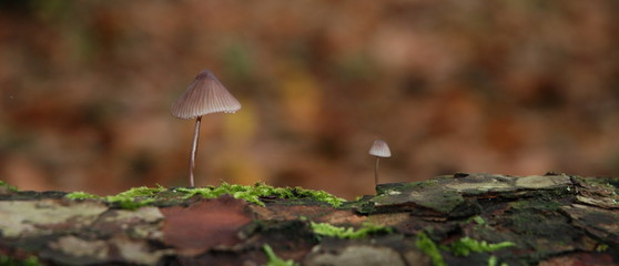 Deux champignons sur une souche