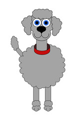 Grey Poodle Cartoon - Isolated on white