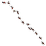 A line of worker ants marching to some destination. poster