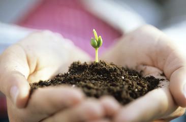 Mann hält Erde, aus der eine Pflanze wächst