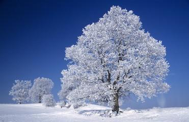Deutschland, Schwarzwald Bäume schneebedeckt