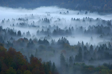 Wald im Nebel, Füssen, Bayern, Deutschland