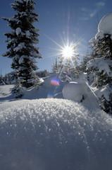 Österreich, Salzburger Land, schneebedeckte Landschaft und Bäume