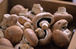 Champignons, mushrooms in box, close up