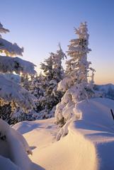 Deutschland, Bayern, Spitzing, schneebedeckte Bäume in der Dämmerung