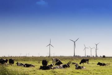 Kühe auf einer Wiese, hinten große Windräder